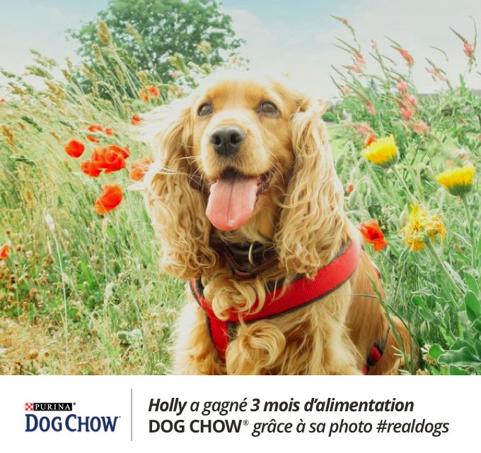 Holly a remporté le concours #realdogs avec Dog Chow® x Yummypets.