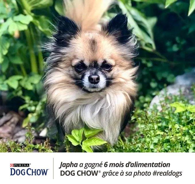 Japha a remporté le concours #realdogs avec Dog Chow® x Yummypets.