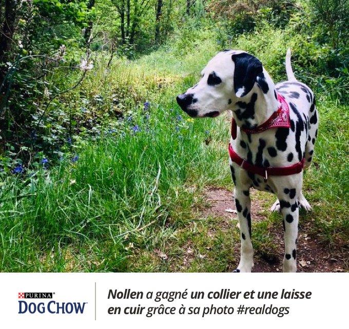 Nollen a remporté le concours #realdogs avec Dog Chow® x Yummypets.
