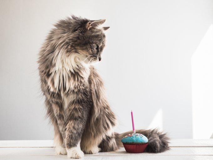 chaton devient adulte