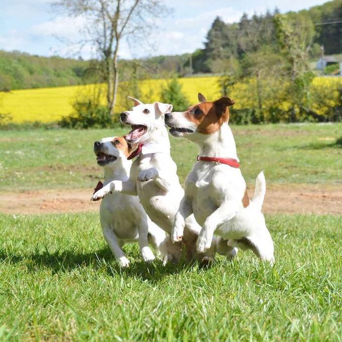 Monette et Mirza ont remporté le concours #realdogs avec Dog Chow® x Yummypets.