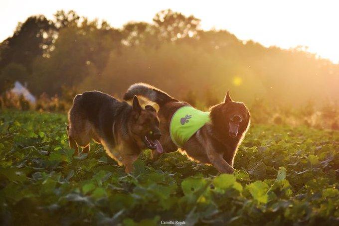Iago a remporté le concours #RealDogs avec Dog Chow® et Yummypets.