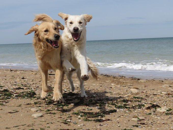 Olaf a remporté le concours #RealDogs avec Dog Chow® et Yummypets.
