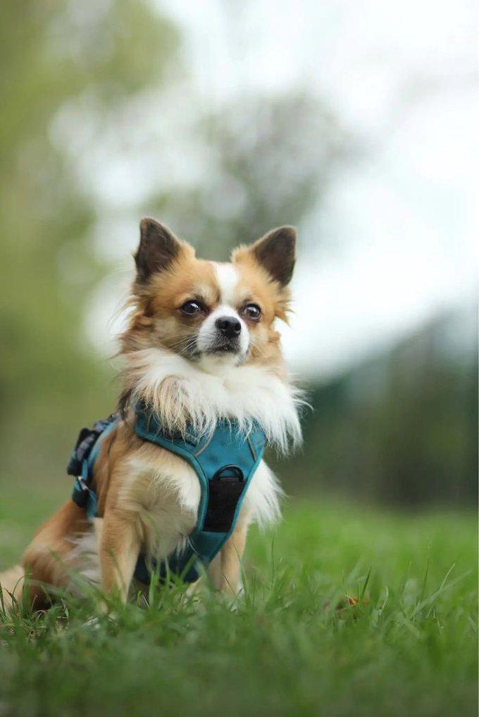 Stuart a remporté le concours #RealDogs avec Dog Chow® et Yummypets.