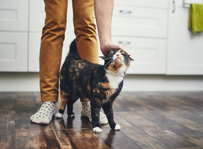 How-do-I-know-if-my-pet-is-happy-Jan-2019-cat