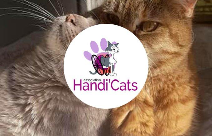 Soutenez l'association handi'cats avec le programme Voice.