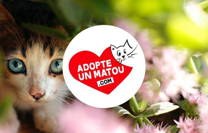 L'association Adopte un matou rejoint le programme Voice en octobre sur Yummypets.