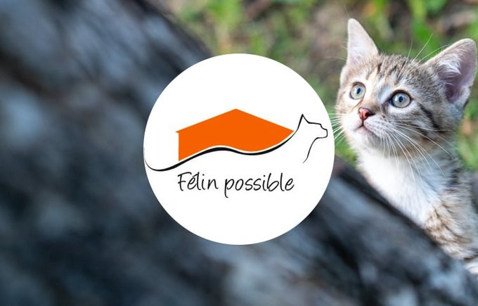 L'association Félin possible rejoint le programme Voice en octobre sur Yummypets.