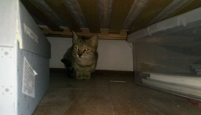 aethena under the bed