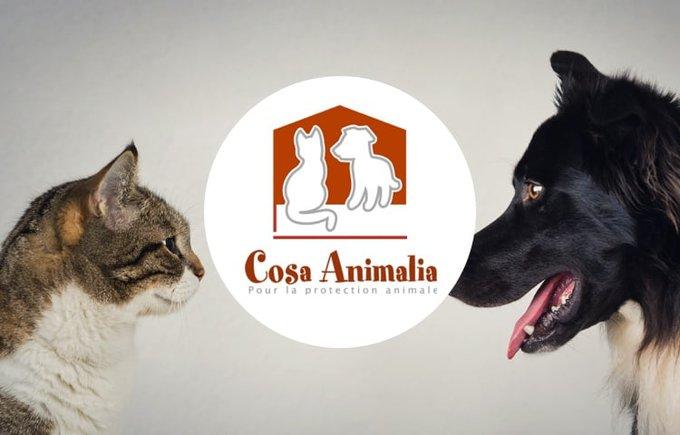 Découvrez l'association Cosa Animalia qui participe au programme Voice.