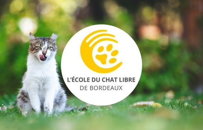 Découvrez l'école du chat libre de Bordeaux qui participe au programme Voice.