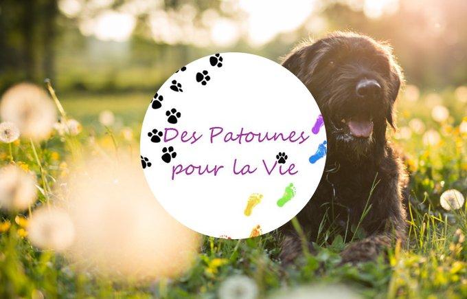 Découvrez l'association Des patounes pour la vie qui participe au programme Voice.
