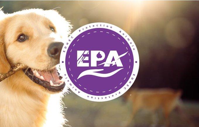 Découvrez l'association EDHEC Protection Animale qui participe au programme Voice.