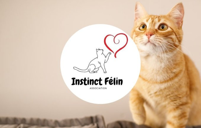 Découvrez l'association Instinct Félin qui participe au programme Voice.