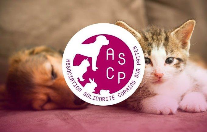 Découvrez l'association Solidarité Copains sur Pattes qui participe au programme Voice.