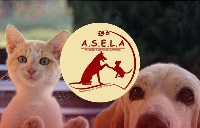 Découvrez l'association ASELA qui participe au programme Voice.