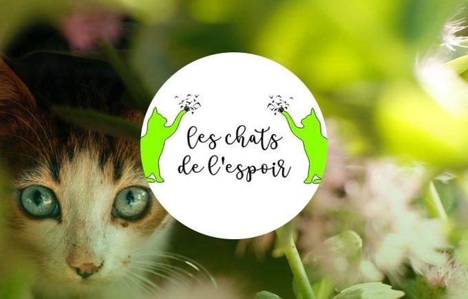 Découvrez l'association Les chats de l'espoir qui participe au programme Voice.