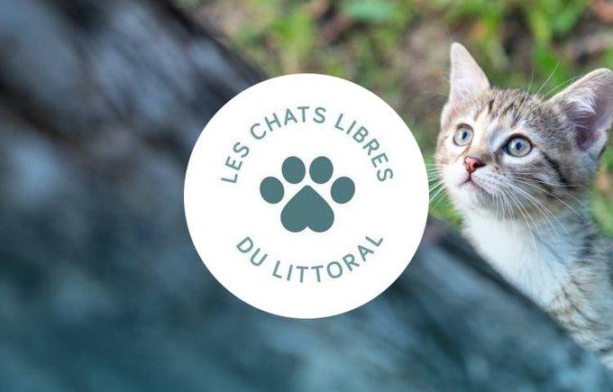 Découvrez l'association Les chats libres du littoral qui participe au programme Voice.