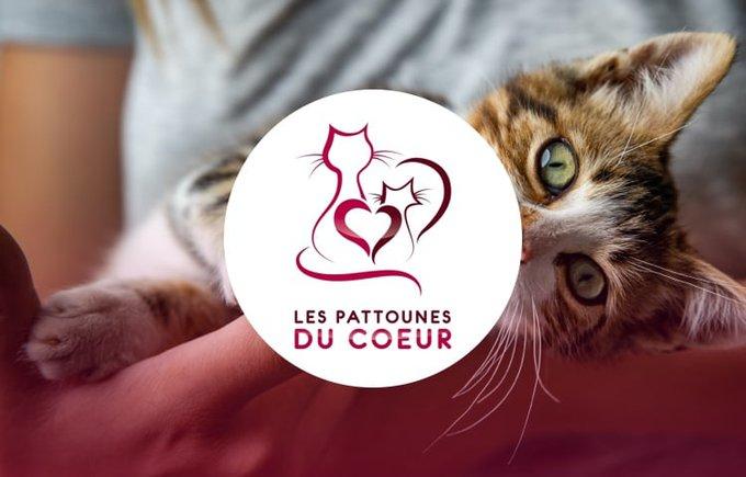 Découvrez l'association Les pattounes du coeur qui participe au programme Voice.