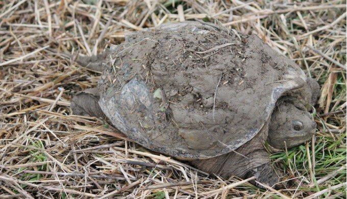 Tout savoir sur l'hibernation de la tortue