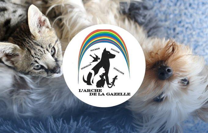 Découvrez l'association l'Arche de la gazelle qui participe au programme Voice.