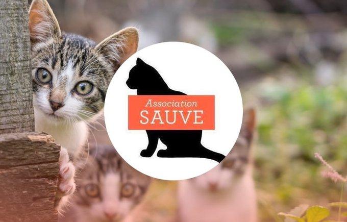 Découvrez l'association Sauve qui participe au programme Voice.