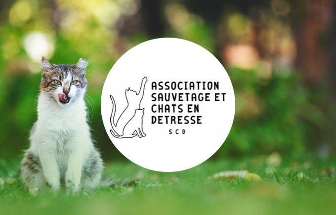 Découvrez l'association Sauvetage et chats en détresse qui participe au programme Voice.