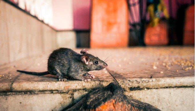 Des animaux sacrés dans le monde
