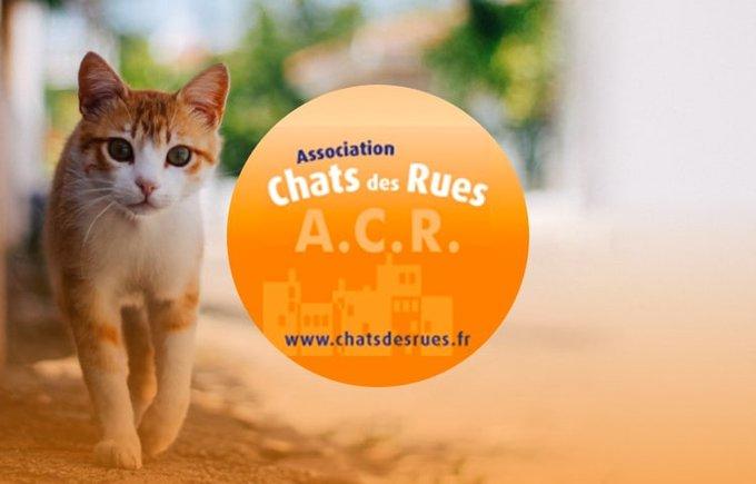 Découvrez l'association Chats des Rues qui participe au programme Voice.