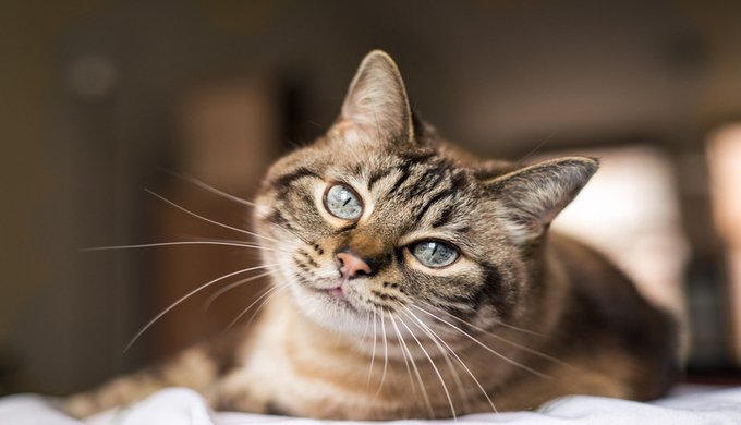 7 things you didn't know about your cat's whiskers