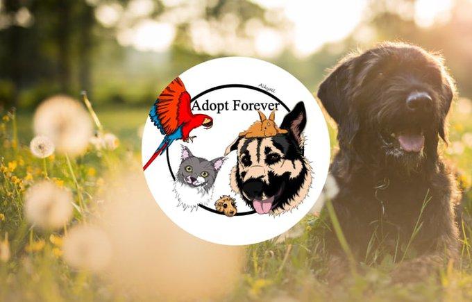 L'association Adopt Forever participe au programme Voice.