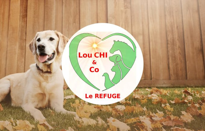 L'association Lou Chi & co participe au programme Voice.