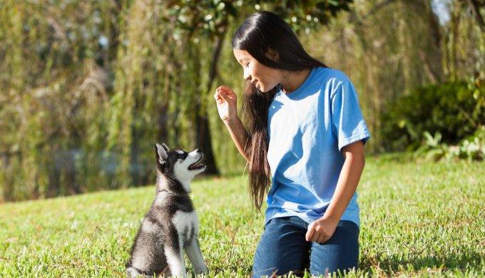 Nom Chien - 10 techniques à savoir - Éducateur canin - Tutorial