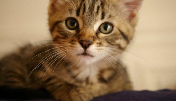 Rencontres pour les propriétaires de chat