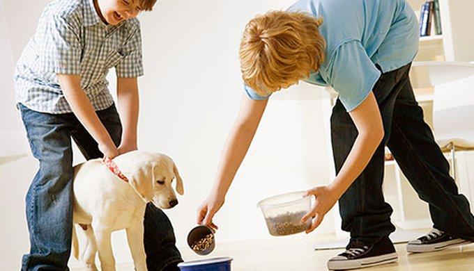 How Often Should I Feed My Dog Yummypets