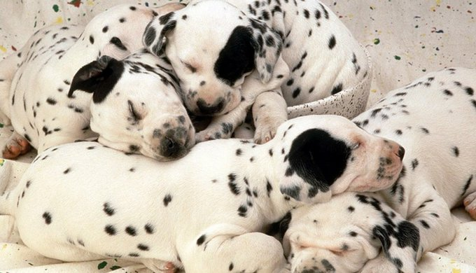 Should Animal Breeding Be Further Regulated Yummypets