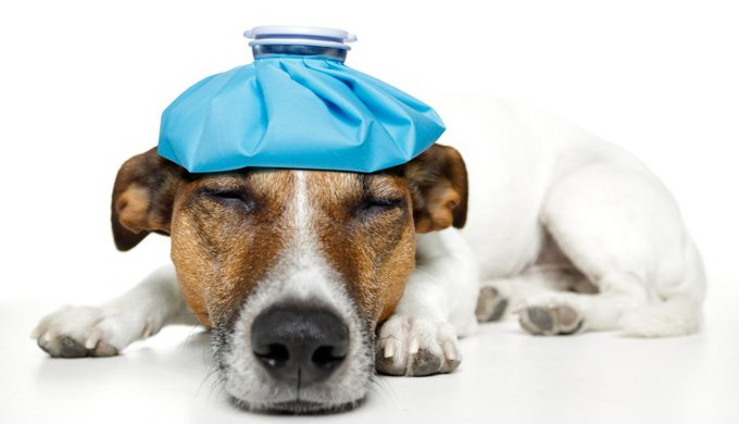 Dog and cat back pain: holistic answers - Yummypets