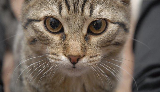 identification du chat : un signe de reconnaissance - yummypets