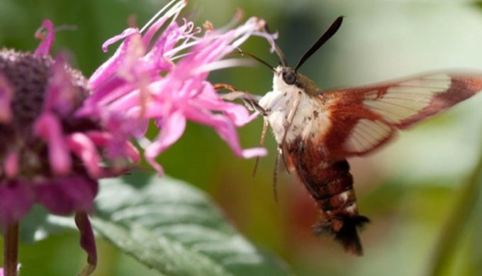 7 exceptional butterfly species yummypets