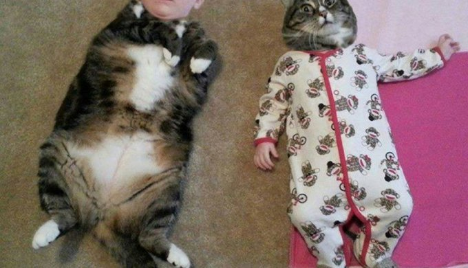 Image of: Captions Discover Very Funny Humananimal Face Swap Compilation Yummypets Discover Very Funny Humananimal Face Swap Compilation Yummypets