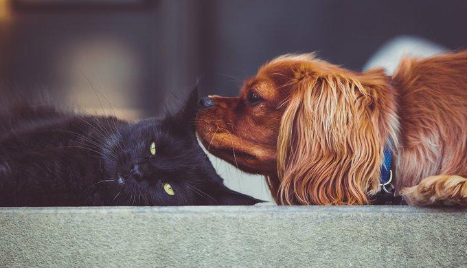 Rencontres des amoureux des animaux du site