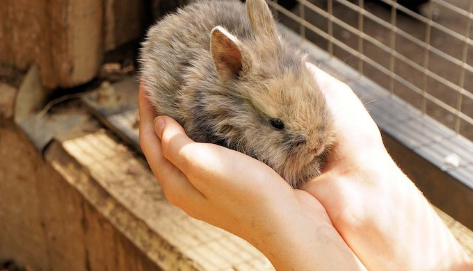 Stress in rabbits: causes and symptoms - Yummypets