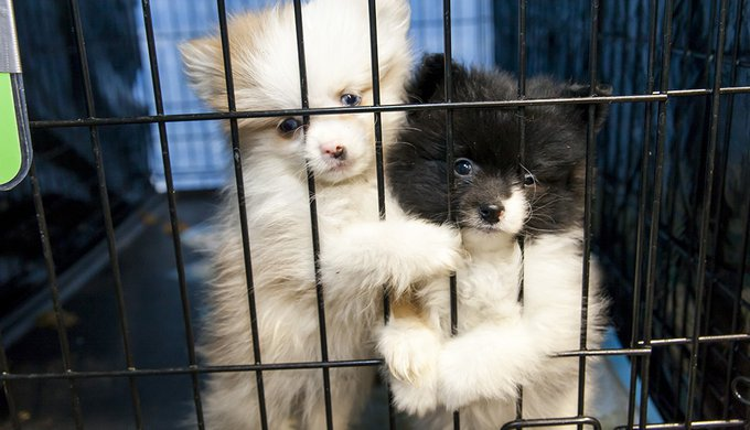 California Passes Bill Forcing Pet Shops To Only Sell Rescue Animals