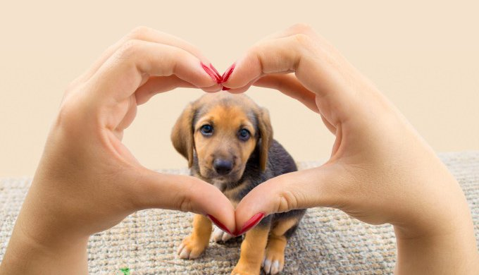 The 4 Signs Of Heart Disease In Dogs You Shouldnt Miss