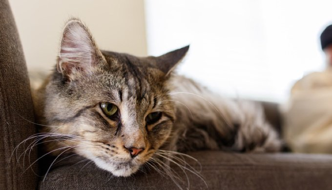 Understanding Old Age What Do Senior Cats Need Yummypets