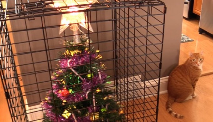 How To Cat Proof Your Christmas Tree.Hilarious Tricks For Pet Proofing Your Christmas Tree