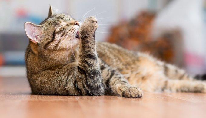 LГ©cher la chatte partie