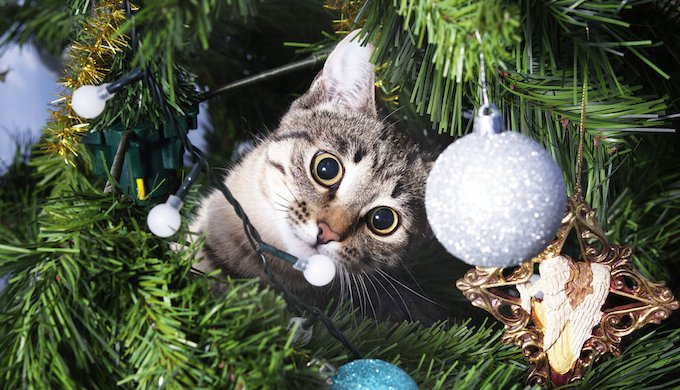 Cats Vs Christmas Trees.Uk Shop Offers Christmas Trees For Cats Yummypets